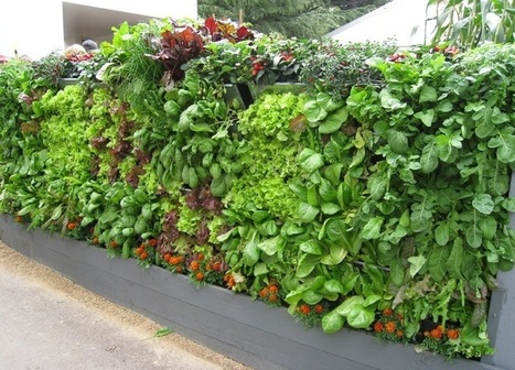 Urban Agriculture and Vegetation: A Foundation of Sustainability | Healthy Cities & Urban Planning | PowerHouse Growers | Urban Agriculture and Design | Scoop.it