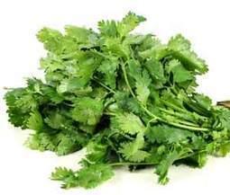 Les feuilles de coriandre, une puissante plante condimentaire qui filtre les métaux lourds | pour mon jardin | Scoop.it