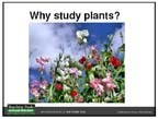 Why Study Plants? | Struktur dan Perkembangan Tumbuhan | Scoop.it