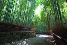 One Day Itinerary to Arashiyam | News | Scoop.it