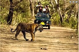 corbett tours,Jim corbett India, corbett holiday package,corbett wildlife safari | Stic Holidays | Scoop.it