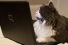 Demotivateur.fr | Le top des chats experts en nouvelles technologies | Trollface , meme et humour 2.0 | Scoop.it