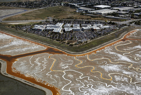 San Francisco Bay: Race to build wetlands is needed to stave off sea-level rise, scientists say | Ecosystems at Risk | Scoop.it