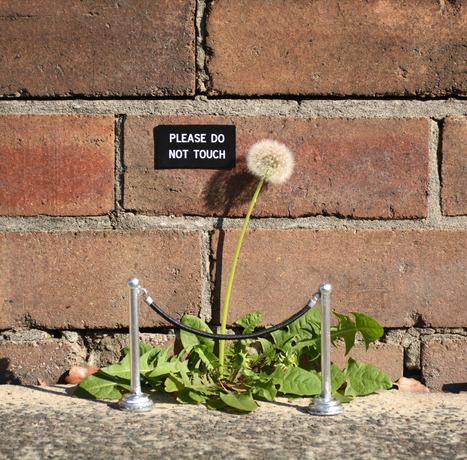 Humorous Street Signs and Other Contextual Street Art Interventions by Michael Pederson | Creación de Contenidos | Scoop.it