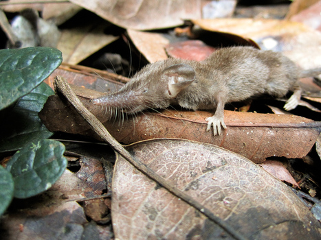 Have I Got Shrews For You | Quite Interesting News | Scoop.it