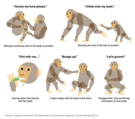 Scientists Decipher Chimp Communication Gestures | Geekologie | ANIMAL LATITUDE NEWS | Scoop.it
