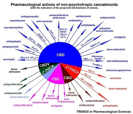 Cannabis Oil Cures Infant of Cancer, Dissolves Inoperable Tumor   Wake Up World   promienie   Scoop.it