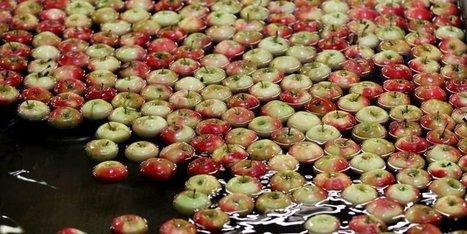 Les millions d'euros perdus par les pomiculteurs du Limousin et de Dordogne avec l'embargo russe | Agriculture en Dordogne | Scoop.it