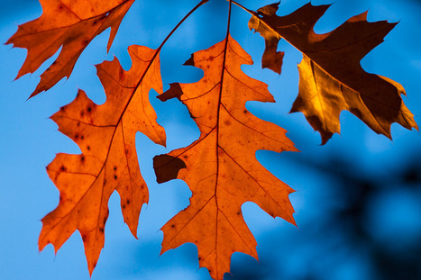 Why Do Leaves Change Color and Fall Off Trees? | STEM Connections | Scoop.it