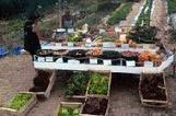 Bio ou local, faut-il choisir ? - Agriculture bio - Environnement - écologie et environnement | Agriculture locale | Scoop.it