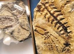 Uruguay /Paleontóloga protege fósiles en su casa - | MOVUS | Scoop.it