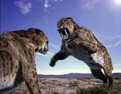 Mengenal Kucing Besar Zaman Prasejarah - Evobig | Bizarre | Scoop.it