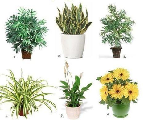 Top 10 Air Purifying House Plants | Stress en entreprise, bien-être | Scoop.it