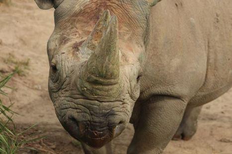 Addressing wildlife tourism and poaching at World Travel Market - WTM Responsible Tourism Blog   Responsible Tourism   Scoop.it