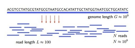Shannon's Mathematical Theory of Communication Applied to DNA Sequencing | Messenger for mother Earth | Scoop.it