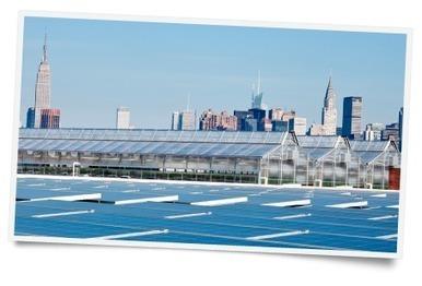 Gotham Greens | Agriculture urbaine, architecture et urbanisme durable | Scoop.it