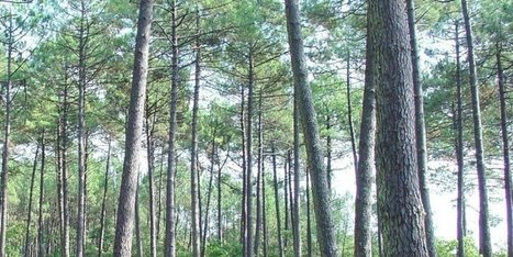 Le prix moyen des forêts françaises en légère hausse   Agriculture en Dordogne   Scoop.it