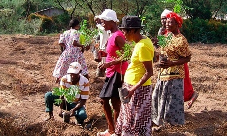 Smallholder farmers are the new global food frontier   sustainablity   Scoop.it