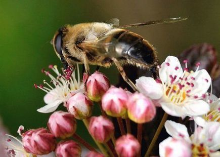 Les abeilles sont tombées comme les mouches aux Etats-Unis | Chimie verte et agroécologie | Scoop.it