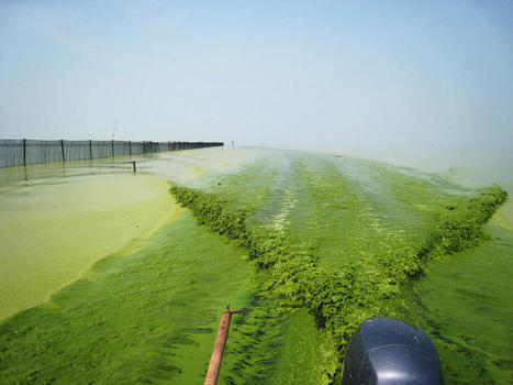 Why Toxic Algae Blooms Are Likely To Get Worse Before They Get Better | exTRA by the Trinity River Authority of Texas | Scoop.it