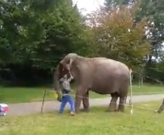 Circus worker sacked after he is caught on film hitting an elephant - DutchNews.nl | Nature Animals humankind | Scoop.it