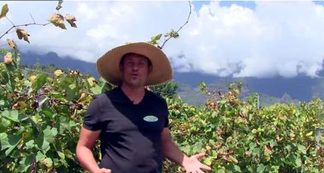 Le charme des vins de l'Île de La Réunion, fantasme ou réalité? | Le vin quotidien | Scoop.it