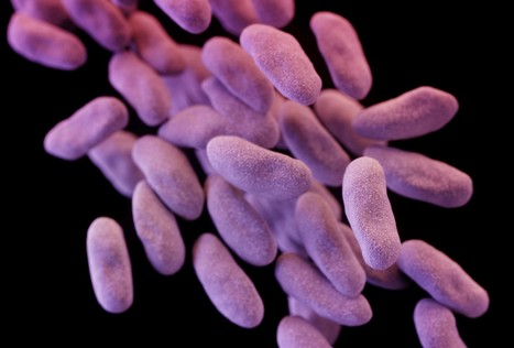 Extra funding sought to fight antibiotic-resistant bacteria | Sustain Our Earth | Scoop.it