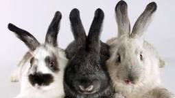 Bunnies wreak havoc on cars at Denver airport | Globe and Mail (Toronto, ON) | CALS in the News | Scoop.it