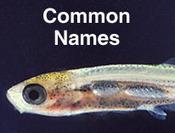 Minnesota Fishes - natural history accounts species list - Global Aqua Link | Fish | Scoop.it