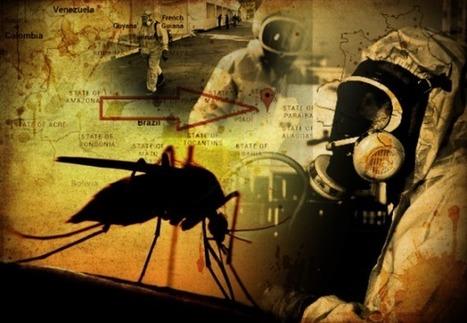 CNA: VIRUS ZIKA y MOSQUITOS OGM - COSAS que te OCULTAN y que DEBES CONOCER   La R-Evolución de ARMAK   Scoop.it
