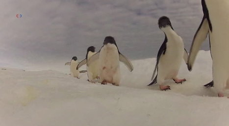 #Penguin #Sanctuary Plan Would Double World's Protected #Oceans | Green Art Cafe | Scoop.it