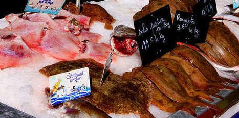 Produits de la mer : les Français mangent moins de poissons - Agro Media | Actualité de l'Industrie Agroalimentaire | agro-media.fr | Scoop.it