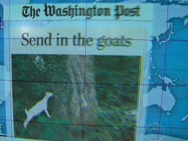 "Video: Headlines at 8:30: Goat herd deployed to clean up historic ""Congressional Cemetery"" 