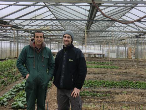 Agriculture urbaine et ceinture verte à Bruxelles | Lateral Thinking Knowledge | Scoop.it