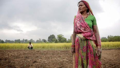 India's rice revolution | Gentlemachines | Scoop.it