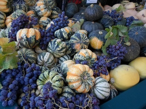 Agriculture News Links – November 8, 2013 | Big Picture Agriculture | Agricultural & Horticultural Industry News | Scoop.it