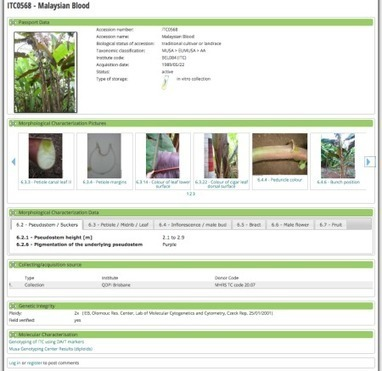 New version of banana genebank information system goes live | Agricultural Biodiversity | Scoop.it