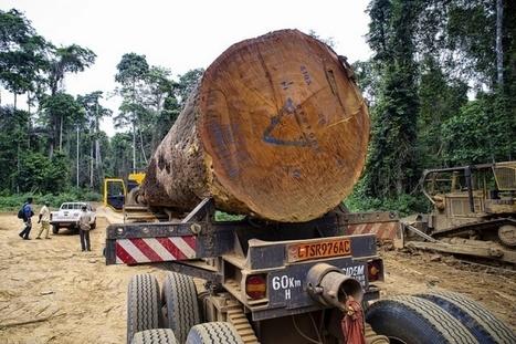 Cameroun - Ministère des Forêts et de la Faune: De nouvelles normes pour la géolocalisation du bois | Confidences Canopéennes | Scoop.it