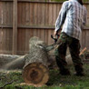 General Tree Care & Lawn Service
