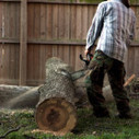 Outstanding tree services by General Tree & Lawn Service.   General Tree Care & Lawn Service   Scoop.it