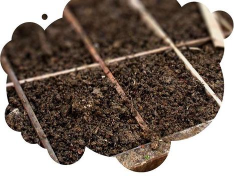 Agriculture urbaine, utopie ou réalité ? - 10 février 2015 | Plus de légumes et moins de béton | Scoop.it
