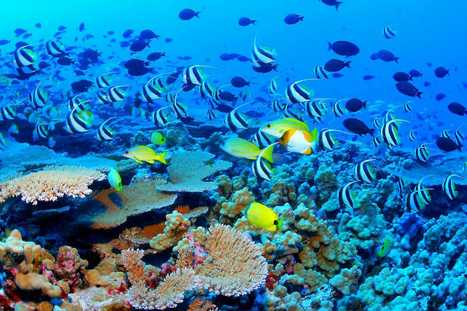 Scuba Diving in Australia | Australian Tourism Export Council | Scoop.it