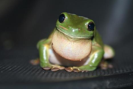 Attracting Wildlife to Your Deck or Patio | Wizard Home Improvements' Official Tumblr | Wizard Home Improvements | Scoop.it