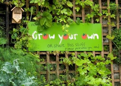 Cibo gratis negli orti urbani di Todmorden | Il mondo che vorrei | Scoop.it