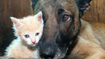 Dog with eight puppies adopts a kitten - Sun News Network   Cute Baby Animals   Scoop.it