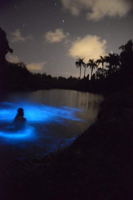 When the Ortoire River glows | Caribbean Islands | Scoop.it