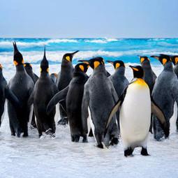 10 Curiosidades de los Pingüinos que te Sorprenderán! | Datos Curiosos de la Ciencia y el Mundo | Scoop.it