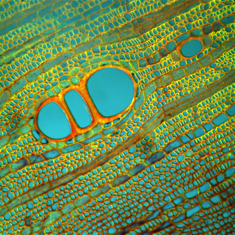 Spectacular Microscopic Art Is Also World-Changing Science | Biosciencia News | Scoop.it