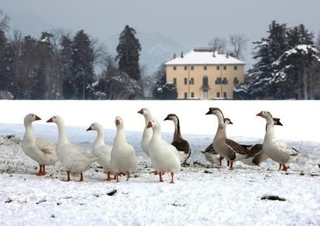 Magico Natale nei parchi piu belli d'Italia - Ambiente&Energia   Ansa.it   Turismo Oggi   Scoop.it