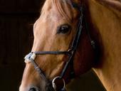 L'Anglo-normand : vent d'indépendance chez les éleveurs de ... - 7seizh | Cheval et Nature | Scoop.it